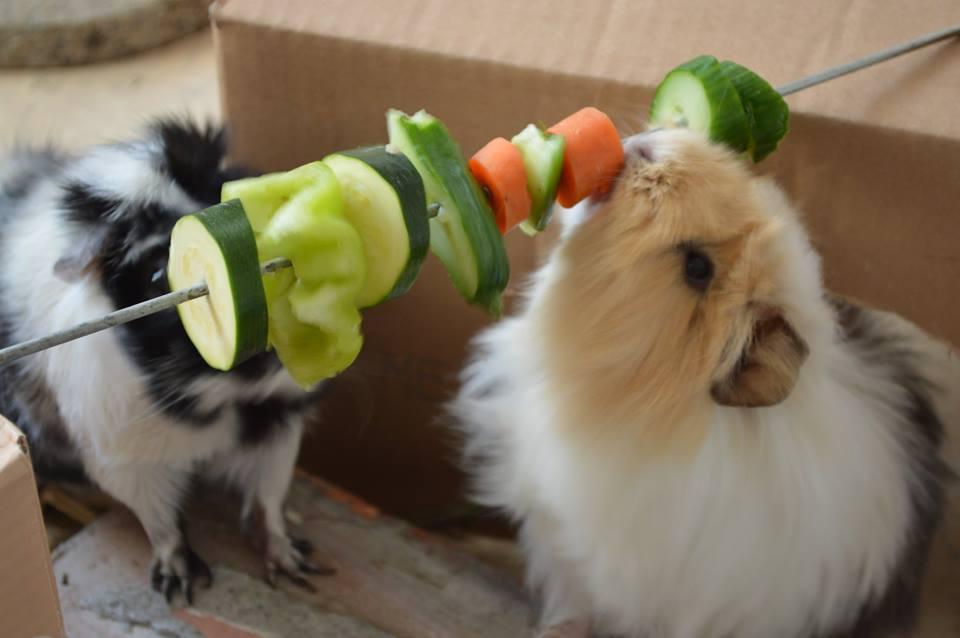 Kaninchenladen